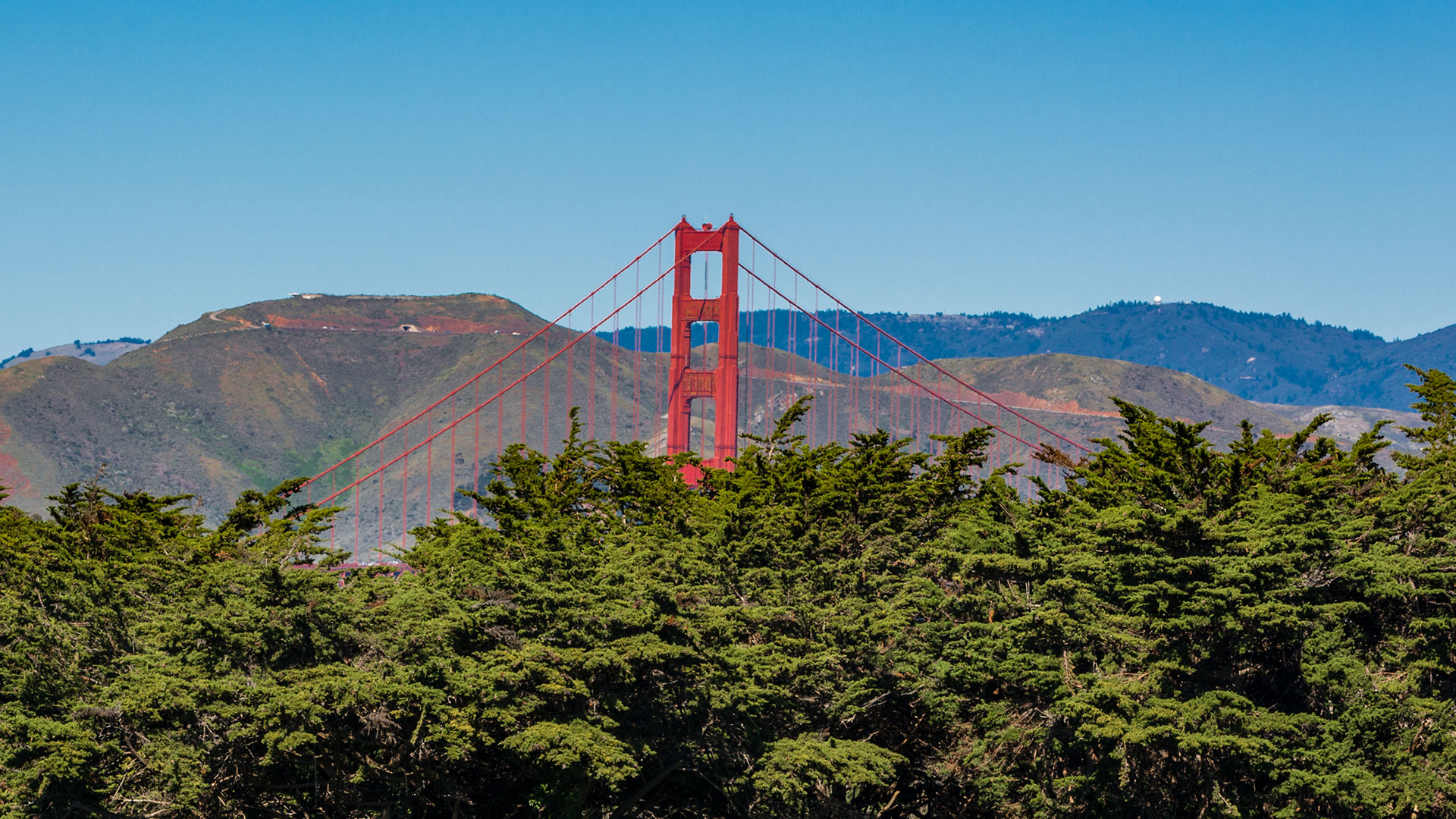 The Golden Gate Bridge Emerges From The Presidio Forest